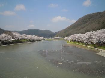 桜橋より.jpg