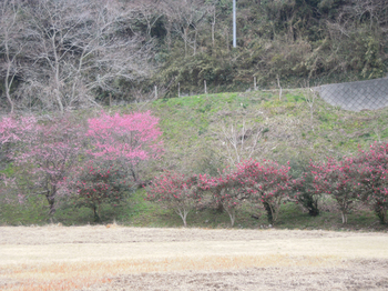花園広場.jpg